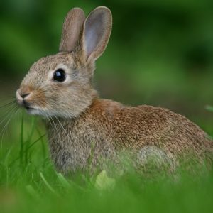 For rabbits
